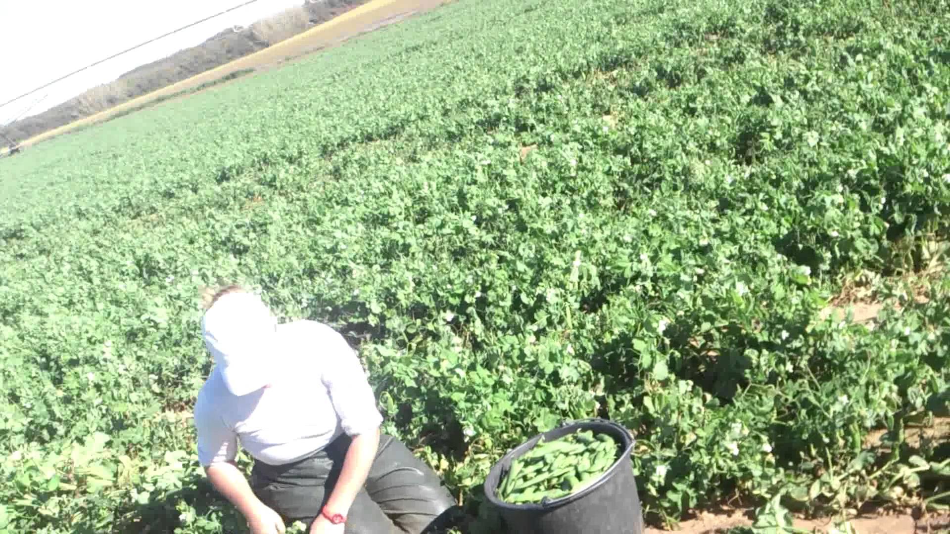 400 locuri de muncă în sectorul agricol, în Danemarca