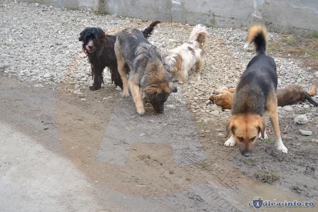3 plângeri penale pentru încălcarea legii privind protecția animalelor
