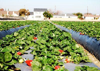 150 locuri de muncă în domeniul agricol, în Spania