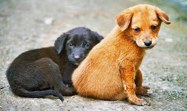 Demararea campaniei GRATUITE de sterilizare a câinilor de rasă comună cu stăpân