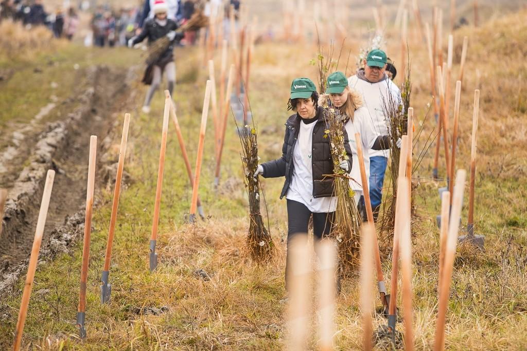 """La Jegălia, s-au plantat peste 6 ha de ,,fapte bune"""""""