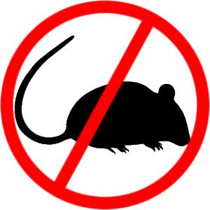 În perioada 9-12 martie, Primăria Călărași anunță tratamente de deratizare
